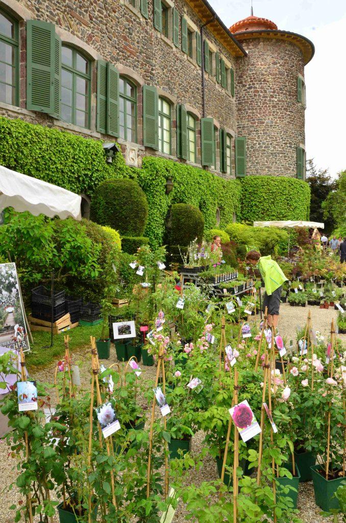 plants et fleurs devant chateau