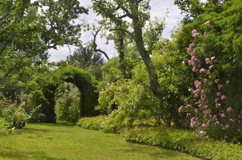 Photo d'un jardin avec roses